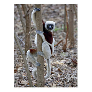Carte Postale Le Madagascar, réservation d'Ankarafantsika ;