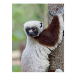 Carte Postale Le Madagascar, réservation d'Ankarafantsika,