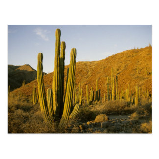 Carte Postale Le Mexique, Baja, île de Père Noël Catalina, mer