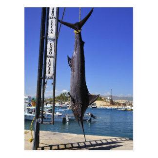 Carte Postale Le Mexique Marlin