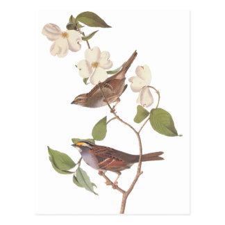 Carte Postale Le moineau Throated blanc d'Audubon