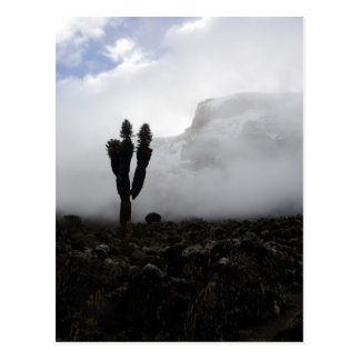 Carte Postale Le mont Kilimandjaro (portrait)