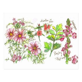 Carte Postale Le muflier rose de cosmos fleurit le croquis