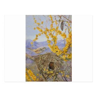 Carte Postale Le nid de l'oiseau armé dans l'acacia Bush, Chili