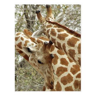 Carte Postale Le Niger, Koure, deux girafes dans les buissons