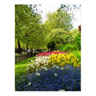Carte Postale Le parc jaune de St James, Londres, Angleterre