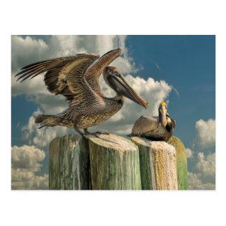 Carte Postale Le pélican parodie la faune de la Floride