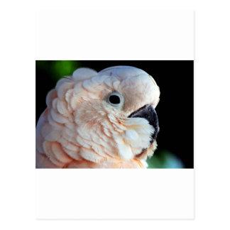 Carte Postale le perroquet sont affectueux