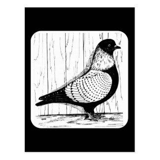 Carte Postale Le pigeon d'étourneau Argent-a lacé 1979