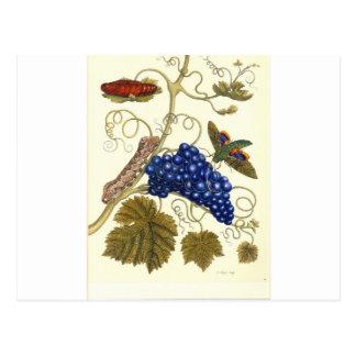 Carte Postale Le plat d'une mite (labruscae d'Eumorpha) cette