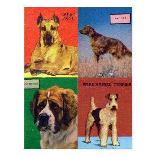 Carte Postale Le rétro kitsch vintage assortit des races de