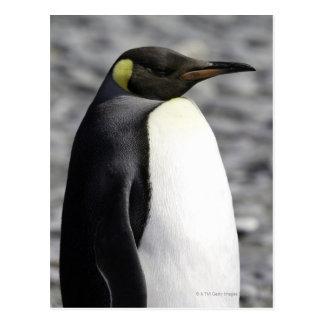 Carte Postale Le Roi pingouin, plaine de Salisbury, la Géorgie