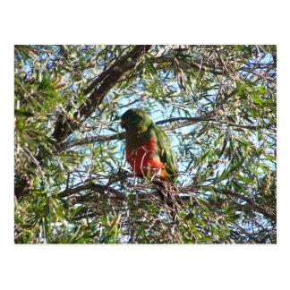 Carte Postale Le Roi vert élégant Parrot With Orange Chest
