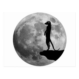 Carte Postale le suricat de meerkat erdmännchen la lune de mond