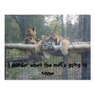 Carte Postale Le tigre ennuyé