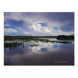 Carte Postale Le Venezuela, delta Amacuro, delta de l'Orénoque