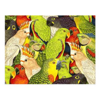 Carte Postale Le vert lunatique de nature Parrots le motif