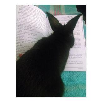 Carte Postale Lecture de lapin