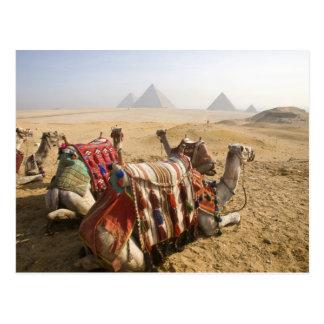 Carte Postale L'Egypte, le Caire. Regard fixe de repos de