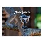 Carte Postale Lémur du Madagascar