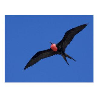 Carte Postale L'Equateur, Galapagos. Tour d'île de Genovesa aka,