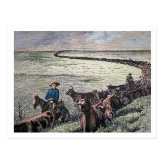 Carte Postale Les bétail de Longhorn conduisent par le Texas à
