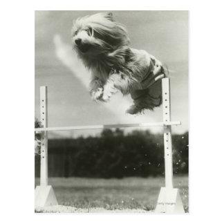 Carte Postale Les chiens sautant par-dessus la barre en hauteur