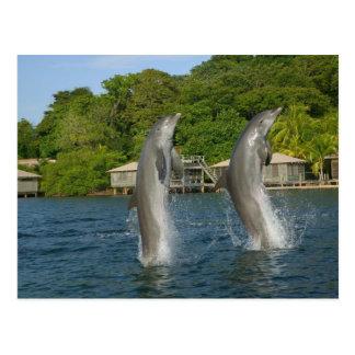 Carte Postale Les dauphins sautant, Roatan, îles de baie,