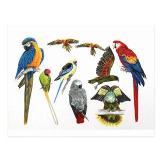 Carte Postale Les différents types de cadeau de perroquet pour