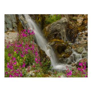 Carte Postale Les Etats-Unis, Alaska, parc national de baie de