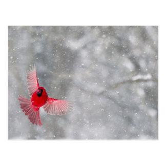 Carte Postale Les Etats-Unis, Indiana, Indianapolis. Un cardinal