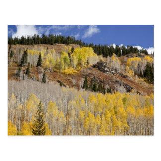 Carte Postale Les Etats-Unis, le Colorado, réserve forestière de