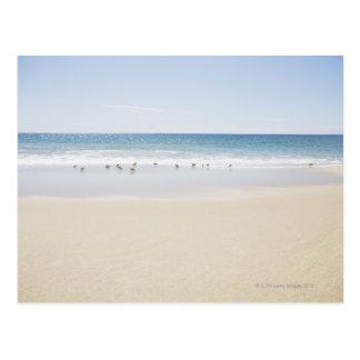 Carte Postale Les Etats-Unis, le Massachusetts, plage vide 3