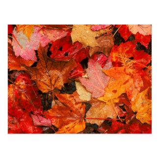Carte Postale Les Etats-Unis, Maine. Feuille d'érable d'automne