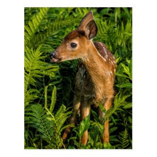 Carte Postale Les Etats-Unis, Minnesota, grès, faune 16 du
