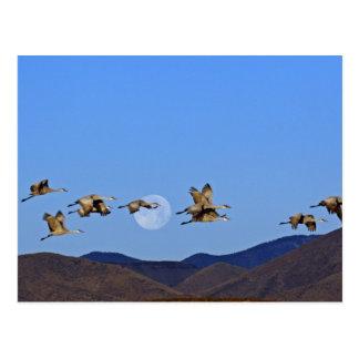 Carte Postale Les Etats-Unis, Nouveau Mexique, Bosque Del Apache
