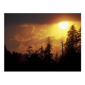 Carte Postale Les Etats-Unis, Tennessee, Great Smoky Mountains