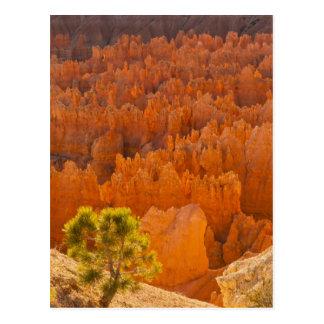 Carte Postale Les Etats-Unis, Utah, parc national de canyon de