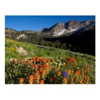 Carte Postale Les Etats-Unis, Utah, réserve forestière