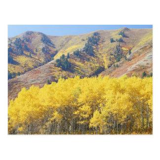 Carte Postale Les Etats-Unis, Utah, réserve forestière de