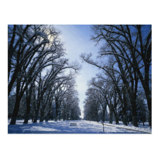Carte Postale Les Etats-Unis, Utah, Salt Lake City, parc de