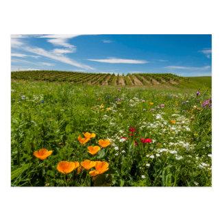 Carte Postale Les Etats-Unis, Washington, Walla Walla. Fleurs