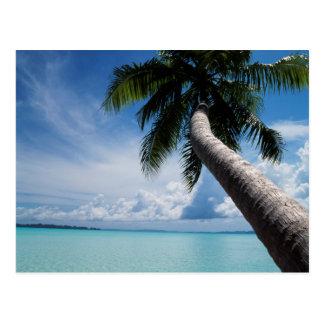 Carte Postale Les Palaos, Micronésie, palmier à la lagune des