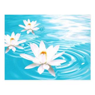 Carte Postale Les plantes de Lotus blanc flottant sur la