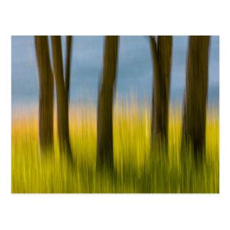 Carte Postale Les troncs d'arbre et engazonnent les îles de |