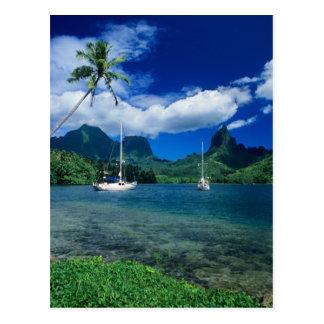Carte Postale Les yachts privés ancrés dans Opunohu aboient sur