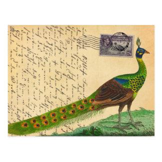 Carte Postale Lettre vintage de paon avec le timbre et le cachet