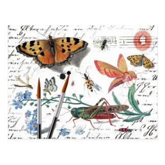 Carte Postale Lettre vintage et cachet de la poste d'insecte
