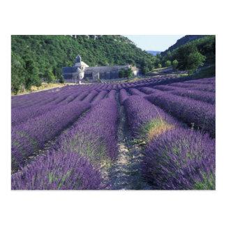 Carte Postale L'Europe, France, Provence. Champs de Lavander