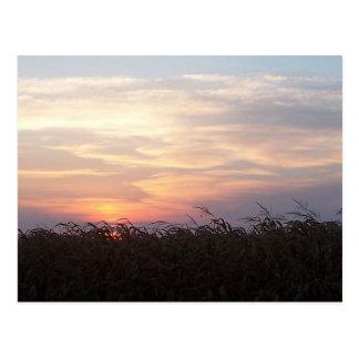 Carte Postale Lever de soleil d'août